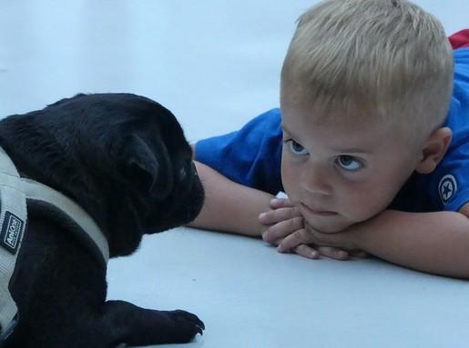 Kutya és gyerek, Kép: pixabay