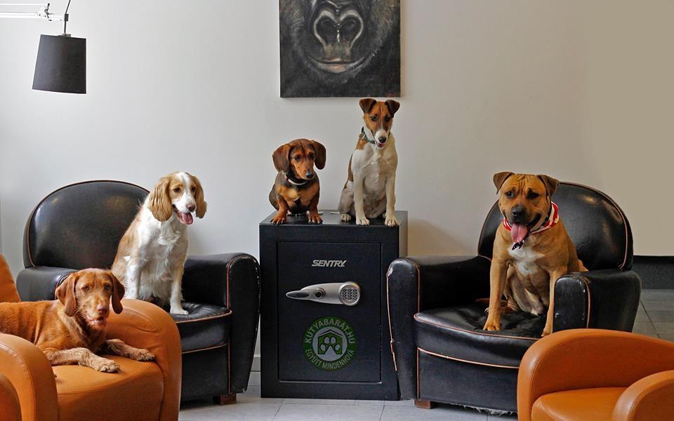 Kutyák a fotelben, Kép: kutyabarat.hu