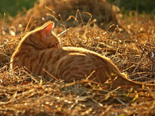 Tavaszi napfényben sütkérező cicus, Kép: pixnio