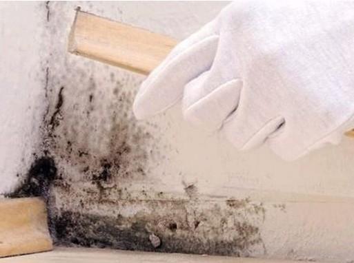 Védekezés a penészgombák ellen, Kép: Svábhegyi Gyermekgyógyintézet honlapja