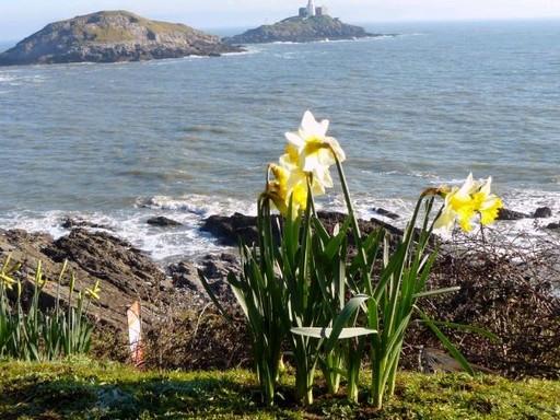 Wales és a nárcisztövek, Kép: pxhere