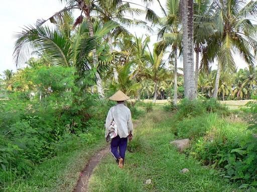 Indonézia, Kép: pixabay