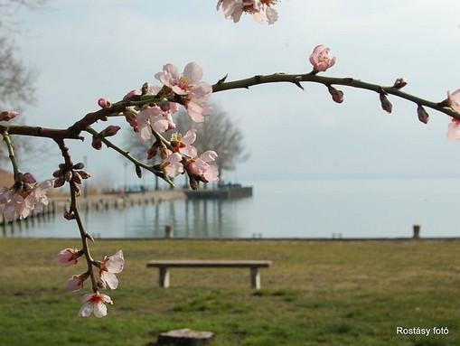 Tavasz a parton, Kép: wikimedia