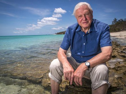 David Attenborough, Kép: wikipedia