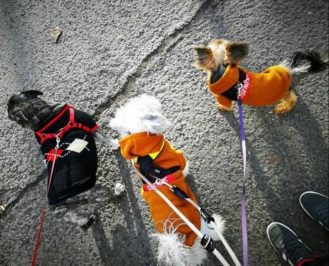 Fázós kutyusok, Kép: Zsákai Réka