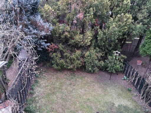 Ilyen volt a kert, Kép: László Márta