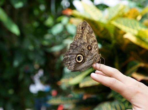 Pillangó kézen, Kép: pxhere
