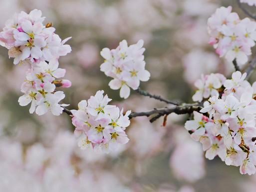 Tavaszi virágok, Kép: publicdomainpictures