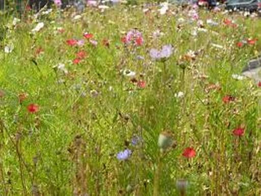 Nyári virágok, Kép: pexels