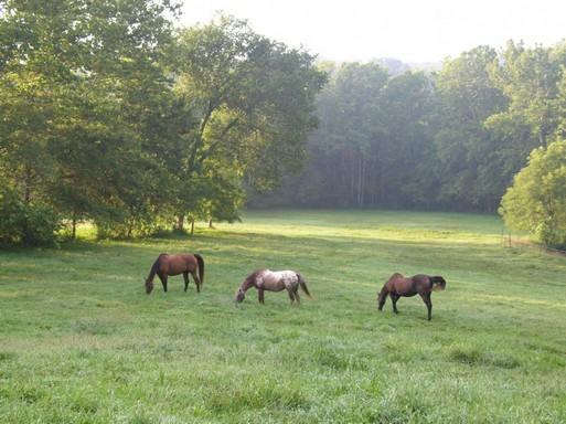 Nyár, lovak, Kép: publicdomainpictures