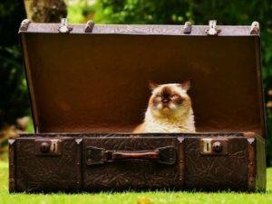 Cica a bőröndben, Kép: pixabay
