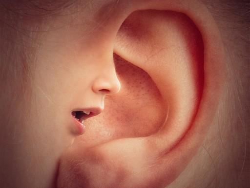 Fülbe beszélő fülcimpa, Kép: pixabay