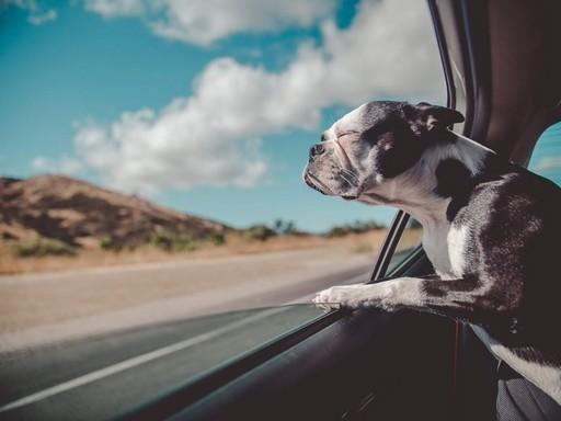Kutya a kocsiban, Kép: sajtóanyag