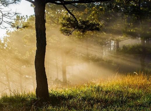 Hajnai őszi köd, Kép: pixabay