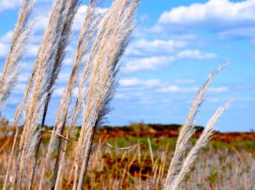 Ősz árvalányhajjal, Kép: pxhere