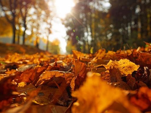 Vénasszonyok nyara, őszi erdő, alshnitt, Kép: pixabay