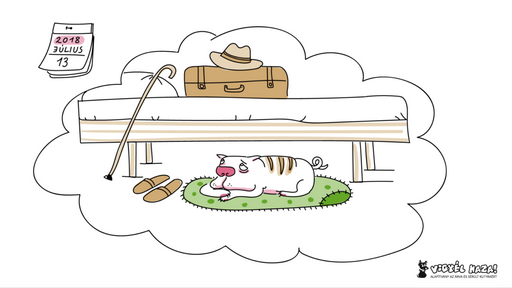 Idős kutya az ágy alatt, Kép: Vigyél Haza Alpítvány
