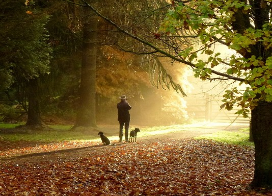 November kutyákkal, Kép: geograph