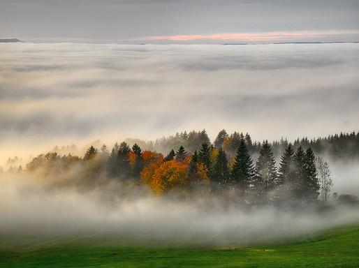 Novemberi köd az erdőben, Kép: flickr