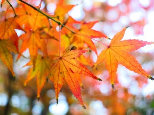 Novemberi levelek,Kép: max pixel